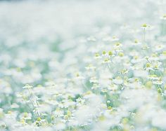 cornflower* on We Heart It Mint Green Aesthetic, Japanese Street Fashion, Little Flowers, Blossom Flower, Paper Background, Amazing Flowers, Bloom, Colours, Photo And Video