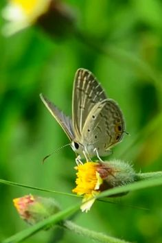 Butterfly On Flower, Butterfly Pictures, Butterfly Kisses, Butterflies Flying, Beautiful Butterflies, Smoke Wallpaper, Insect Wings, Pretty Fish, Beautiful Photos Of Nature