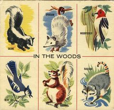 in the woods child's vintage cards