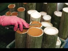 An Introduction to the Benefits of Traditional Bamboo Salt Products in K...