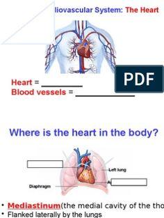 Cardiac Dysrhythmias | Electrocardiography | Cardiovascular System Heart Blood Flow, Nclex, Presentation Slides, Blood Vessels, Word Doc, Cavities, Words, Horse