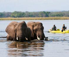 Old Mondoro, Zambezi River, Lower Zambezi NP, Zambia River Camp, Camping Set, Canoe Trip, Beautiful Sites, Wild Dogs, Group Travel, Safari, National Parks