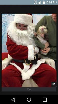 Opossums do not like santas