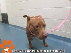 Palm Bch County Fl Please Support Your Shelter Animals Any Way You