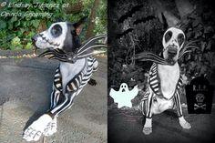Great Dane halloween costume! Bad ass!