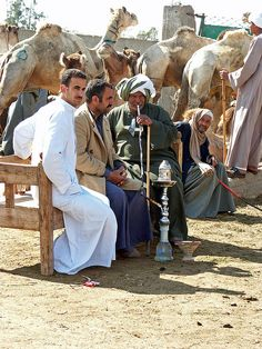 :::: PINTEREST.COM christiancross :::: Camel Market near Cairo