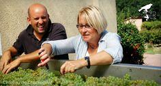 De la vigne au chai - reportage photo ! Chantegrive - harvest . sorting table - grapes - Marie Hélène Lévêque