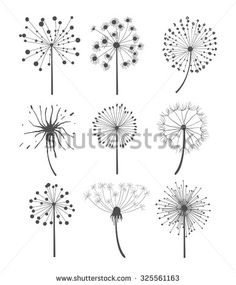 stock-vector-abstract-graphic-dandelion-collection-in-linear-style-vector-illustration-set-325561163.jpg 388×470 pixels