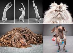 Animals: Carli Davidson