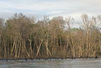 La erosión de la costa y el retroceso de los manglares por el aumento del nivel del mar, son evidentes en algunas zonas deltaicas, como la Bahía de Cispatá.