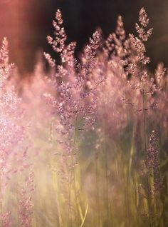 Warm summer grasses...