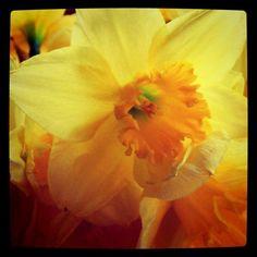 daffodil=favorite.