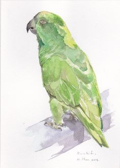 Yellow Naped Amazon parrot https://www.facebook.com/artwork.friner