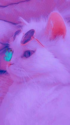 Wallpaper Gatos, Funny Cat Wallpaper, Cute Galaxy Wallpaper, Animal Wallpaper, Cute Cartoon Wallpapers, Cute Kawaii Animals, Super Cute Animals, Cute Little Animals, Cute Baby Cats