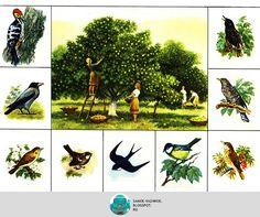 """A legfontosabb: Állatkert BINGO """"az állatvilágban"""""""