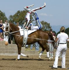 equestrian vaulting | Lunger is Intricate Part of Vaulting Team – discoverhorses.com