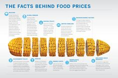 The Facts Behind Food Prices. Great Infographic that shows an ear of corn diced up according to the factors that affect food prices!