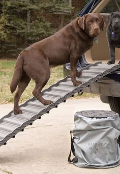 Reduce the stress on your pet's joints as they climb in and out of your vehicle with the Roll Up Dog Ramp, perfect with pets with limited mobility.