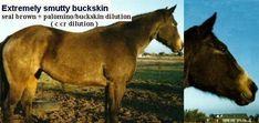 smutty buckskin