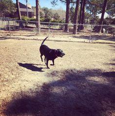 Green Springs Dog Park Birmingham Al