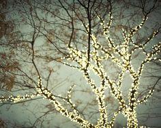 árbol con luces