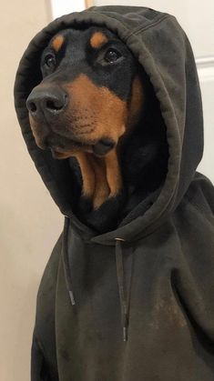 Doberman Noir, Black Doberman, Cute Funny Animals, Cute Baby Animals, Beautiful Dogs, Animals Beautiful, Perro Doberman Pinscher, Scary Dogs, Cute Animal Photos