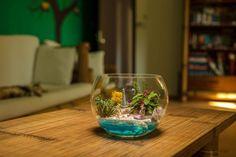 Terariu plante, decoratiune plante suculente Wine Glass, Table Decorations, Tableware, Home Decor, Dinnerware, Decoration Home, Room Decor, Tablewares, Dishes