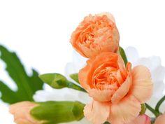 flores claveles - Pesquisa Google
