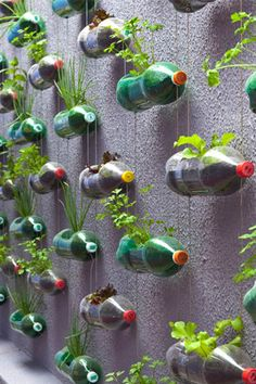 2-liter bottles as a vertical garden.  Seems like watering from the top would let the water drip down to the bottles beneath, saving water too.