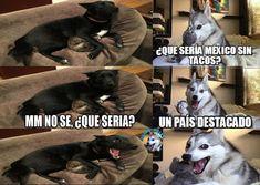 memes del perro husky