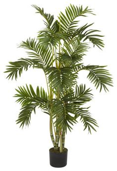 4' Areca Palm Silk Tree - contemporary - Plants - Modern Furniture Warehouse