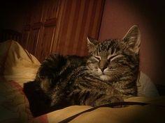 #Kitty #cat #Kissa
