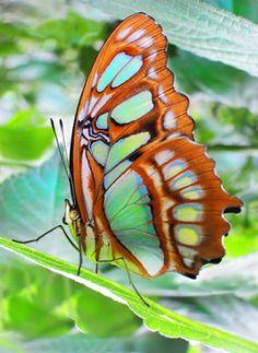 butterflies butterflies butterflies!!