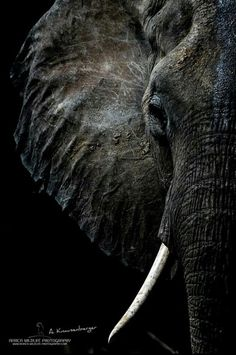 Elephant Black And White African Animals Save The Elephants