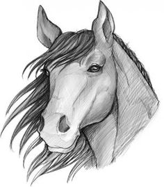 How to Sketch a Horse, Step by Step, Sketch, Drawing Technique, FREE Online Drawing Tutorial, Added by Dawn, March 24, 2012, 8:43:38 am