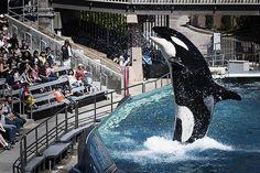 SeaWorld's Defenders Fight Back