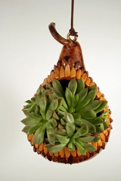 Gourd succulent and cactus hanging planter by EricsGourdArt