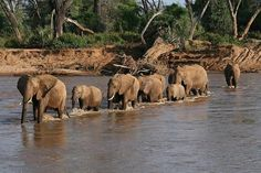 Samburu National