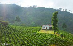 Honduras es el primer exportador de Café orgánico a nivel mundial, Por lo tanto, tenemos que sentirnos orgullosos de nuestro país