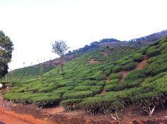 Tea Estates in Chikmagaluru