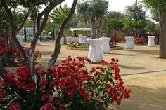 Hacienda Ballemari. Manitou. Mayo 2012