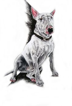 #BullTerrier in Pastel and Charcoal #English #Bull #Terrier #Dog #Terriers #Creative #Dogs #DogArt #Drawing