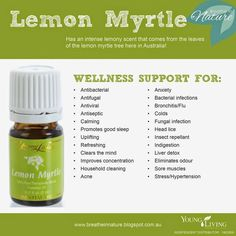 Young Living Essential Oils : Lemon Myrtle Oil Smells more 'lemony than lemon'. Www.youngliving.org/ambermoore