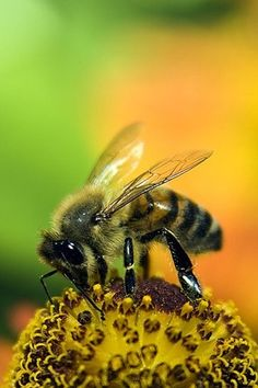 Amazing, those honey bees...And my little Honey Bee is more amazing than any of them!