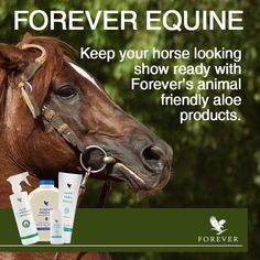 The Forever opportunity has helped millions of people all over the world look better, feel better and live the life of their dreams. Discover Forever's Incentives. Forever Freedom, Aloe Drink, Forever Living Business, Live Animals, Forever Living Products, Show Horses, Weight Management, Aloe Vera, Feel Better