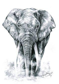 Elephant Head Tattoo, Realistic Elephant Tattoo, Elephant Tattoo Meaning, Giraffe Tattoos, Elephant Tattoo Design, Animal Tattoos, Flying Elephant, Elephant Love, Wildlife Paintings
