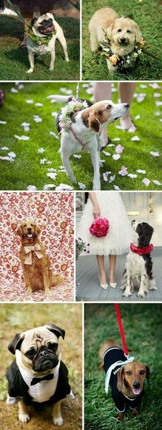 wedding dogs....this could catch on !