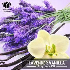 4 OZ FOR CANDLE /& SOAP MAKING BY VIRGINIA CANDLE SUPPLY SANDALWOOD FRAGRANCE OIL FREE S/&H IN USA