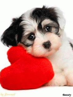 Ver imagen de tierno perrito junto a corazón con movimiento