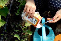 Приготовление раствора пищевой соды для полива